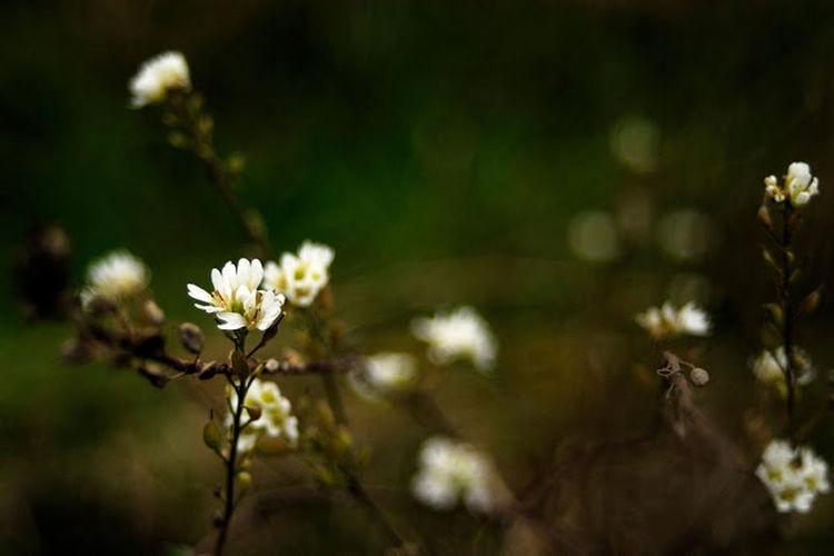 выдох Relaxing Природа рыльск natural Nature