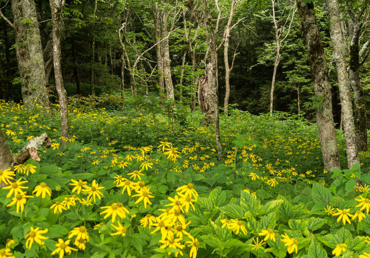 Yellow flowers growing in forest