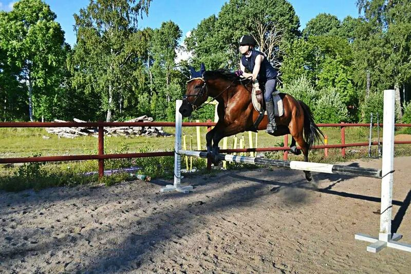Showjumping Horse Horses