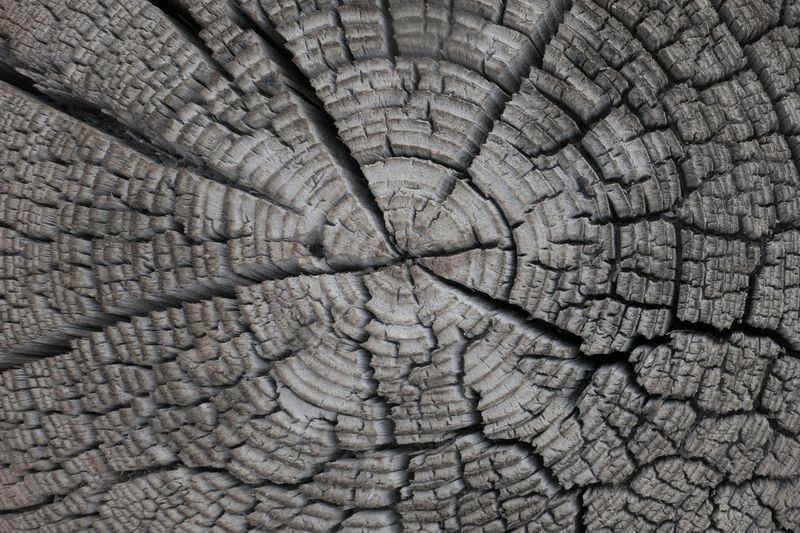 Backgrounds Full Frame Textured  Pattern No People Close-up Bark Tree Ring Cracked Natural Pattern Tree Day Nature Rough Tree Stump Outdoors Wood - Material Geometric Shape Concentric