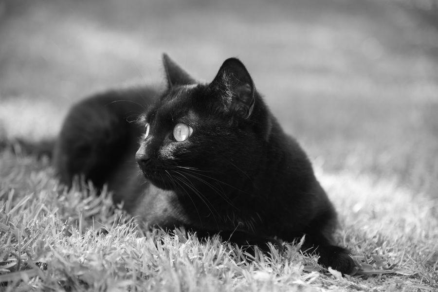 Black Cat Black Cats Cat Cats Cats Photography