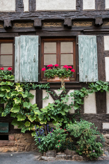 Old house facade with window, Timbered house. Alsace Alsace France France France Photos France Trip Timbered House Timbered Houses Old House Façade Facades Window Plant Architecture Built Structure Flower Growth Building Exterior Flowering Plant Building Nature No People Day House Potted Plant Wood - Material Plant Part Outdoors Leaf Freshness Entrance Window Box Flower Pot