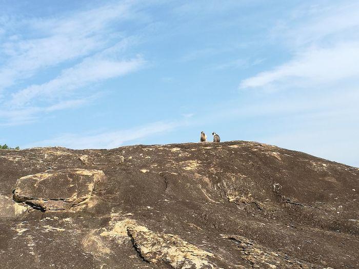 Monkeys sitting on mountain against sky