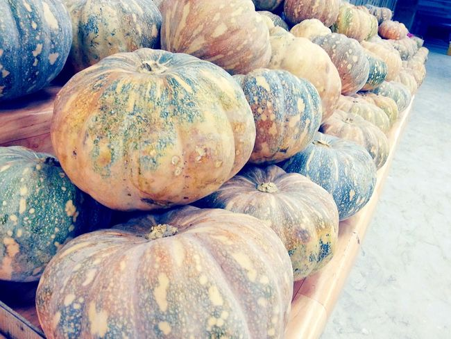 Pumpkins Pumpkin Patch Pumpkin Farm