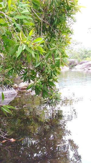 Outdoors, Outside, Open-air, Air, Fresh, Fresh Air, Natural Photography Growth Water Natural Light Beauty In Nature No People Tranquility River Close-up Natural Colours Rainforest Australia Reflection