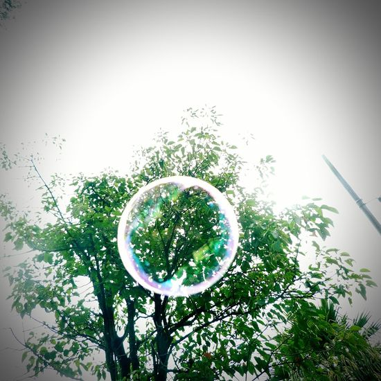 Cool Attitude 📷 By Me Cool_capture_ Photo Cool Bubble Nature 📷JulianAlvarez Photography 📷=🖌🎨 Tree Sky Quemada 😵😵😵😵☠ Bubble Wand Circle Tree Mid-air No People Day Planet Earth Nature