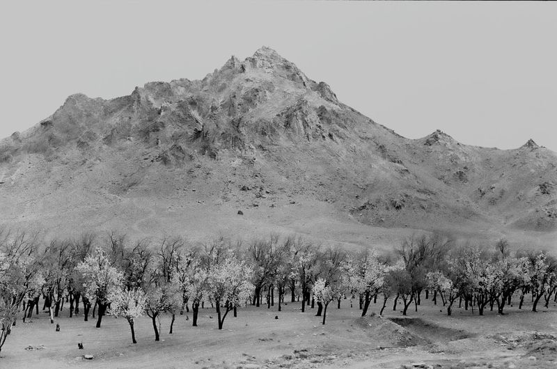 Trees on landscape with mountain range in background