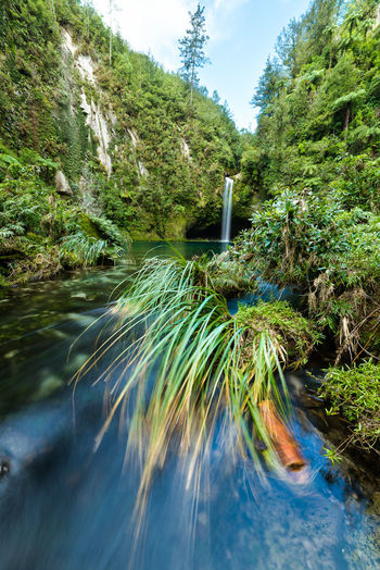 Long exposure of Omanawa Falls Beauty In Nature Flow  Forest Landscape Long Exposure Lush Foliage Lush Vegetation Motion Movement Nature New Zealand No People Outdoors River Scenics Sky Travel Travel Destinations Water Waterfall Woods