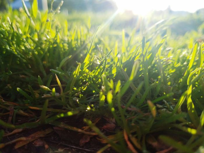Its a different world below 🌱 Growth Nature Plant Field Outdoors Rural SceneDay Cereal Plant Freshness Beauty In Nature Close-up Sky Sunlight Grass Area Grassy Grass And Sky Grassfield Grass Photography Grass Srla Nature Photography No People Agriculture First Eyeem Photo
