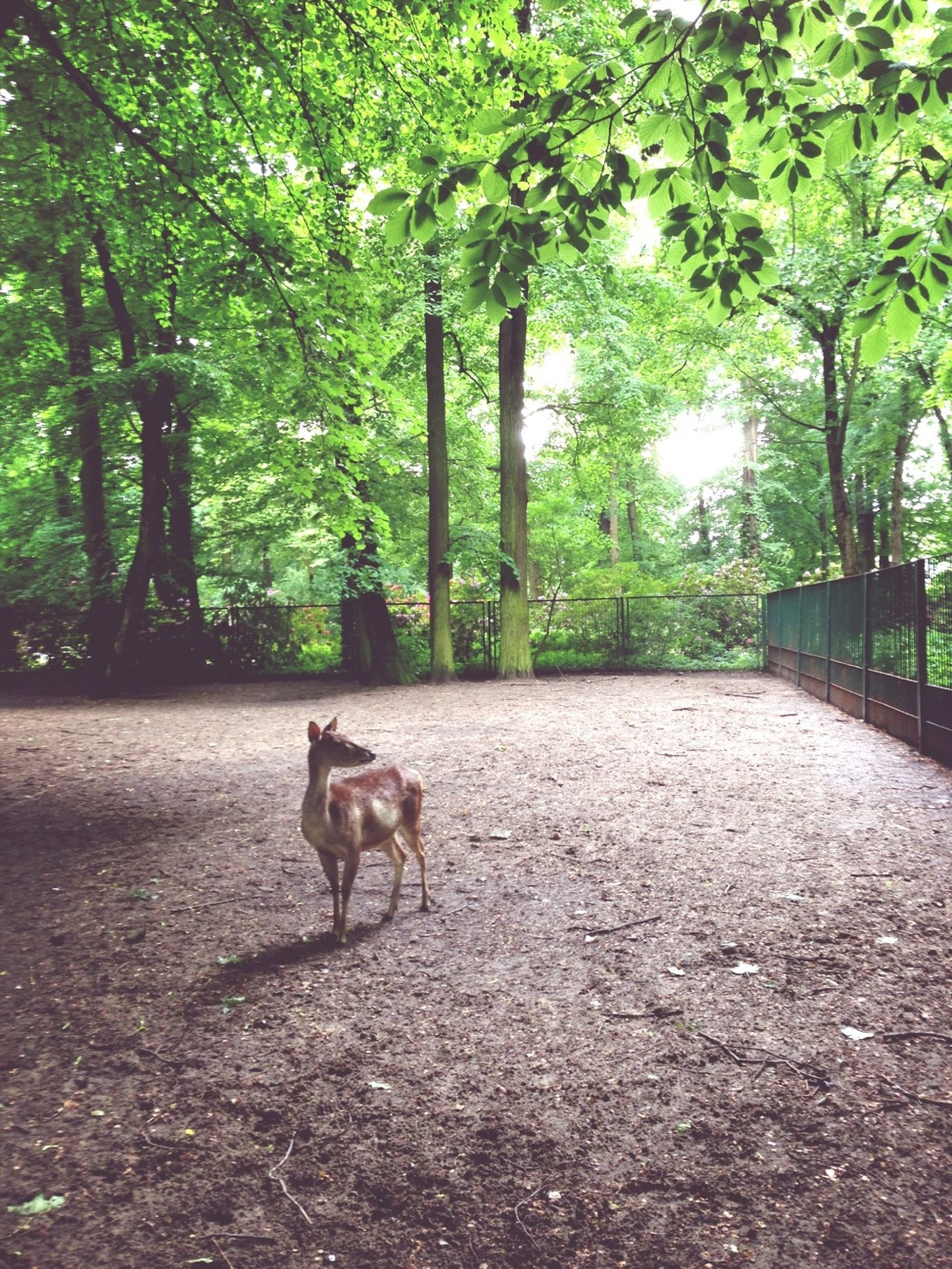 animal themes, domestic animals, mammal, one animal, tree, pets, dog, the way forward, full length, walking, leaf, sunlight, growth, road, nature, day, standing, footpath, outdoors, no people