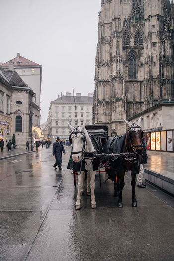 rainy streets in Vienna Rainy Days Rainy Street Rain Horse Horses Horse Carriage Horse Cart Vienna Vienna, Austria Austria Travel Destinations Travel Photography Travel Perspective City Life Street Photography Streetphotography Focus On Foreground Traveling Europe City View  Street Architecture Day People Outdoors City Mammal