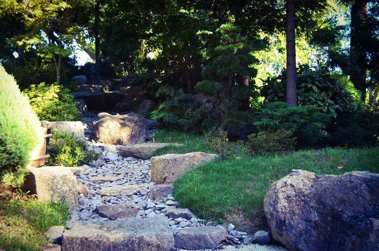 Quiero volver a subir fotos acá. Uruguay Montevideo Jardin Photooftheday D5100 Photography Fotografia FotoDelDia Nikon Raw Water Rock - Object Botanical Garden Garden Botanical