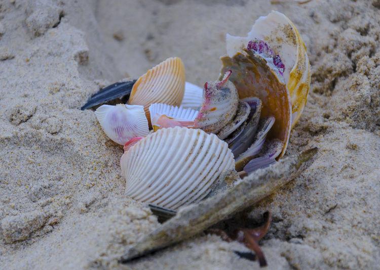 Beach Sand Seashell Sea Nature Outdoors Day Vacations Beauty In Nature Shells🐚 Shell Gold Coast Gold Coast Australia Queensland Australia