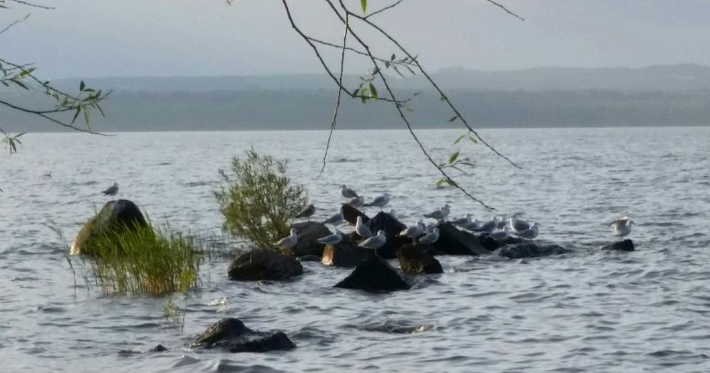 Dontflockwithme Lake Superior Seagulls Gulls WisconsinGreatLake