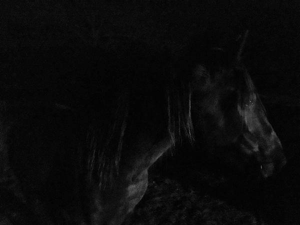 Nightphotography Equine Photography Equine Horse Night Light Tennessee Walker Magical Mysterious Apache's Lightfoot Devil Into The Night Capture The Moment Night Shadows Iphone6s