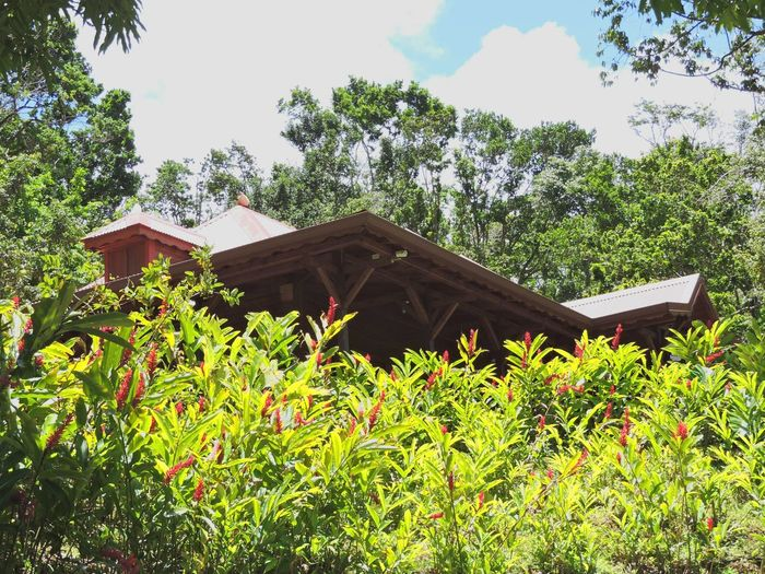 Tree Roof House Sky Architecture Building Exterior Grass Built Structure Plant