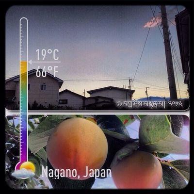 Pagi Ini ڤاڬي اين Buah-buahan بواه٢ن