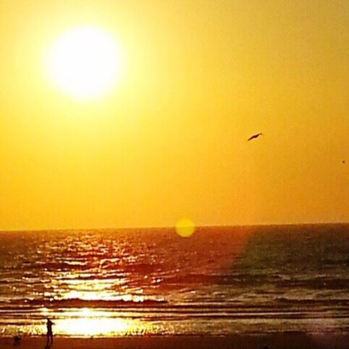 Bird Sunset Sea Animals In The Wild Nature Flying Colour Your Horizn