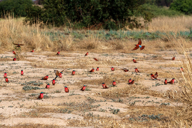 Group of birds on land