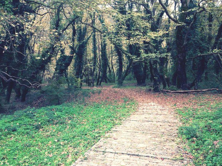 Enjoying Life AWalkInTheWoods Nature Trees Autumn Colors
