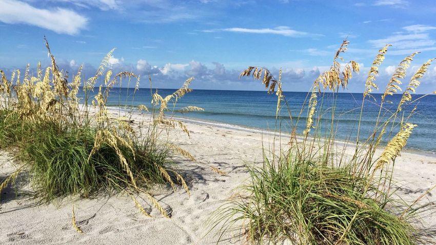 Water Sea Oats Sky Beach