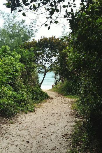 The way of life. Cô Tô Island Quảng Ninh