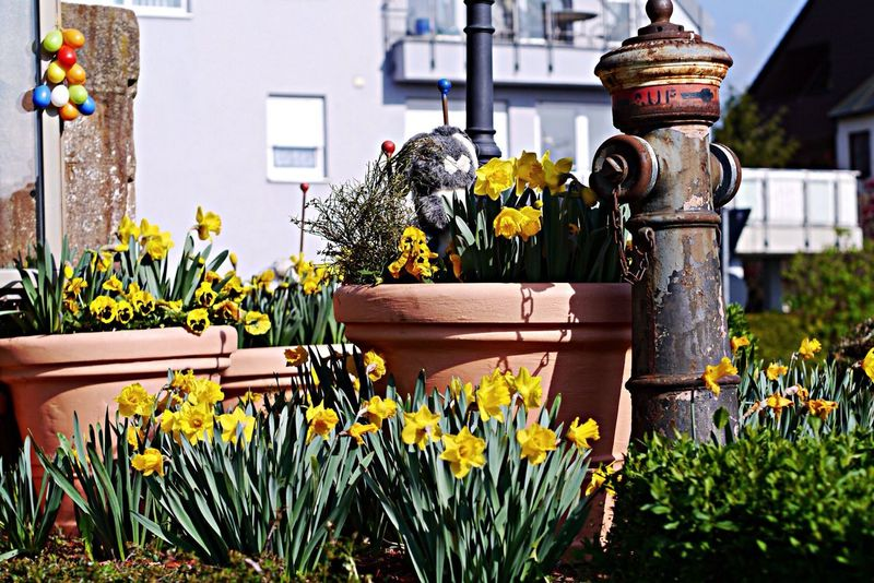 Vintage hydrant with flowers Roundabout Art
