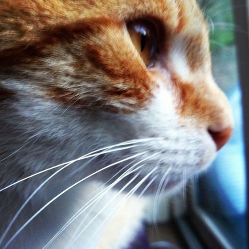 Cat Cats Catlife Magiccat ilovecats sweetcat sweet life love ilovecats kittycat kitty me mood perfectcat