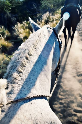 Animal Themes Domestic Animals One Animal Mammal Horse Working Animal Outdoors Day Riding Transportation The Great Outdoors - 2017 EyeEm Awards Nature Speed Livestock Nature Low Section Real People One Person Winter Pets Close-up People Live For The Story Breathing Space