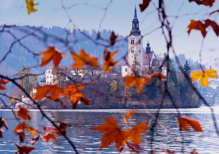 Bled, Slovenia Architecture Autumn Beauty In Nature Branch Building Exterior Built Structure Close-up Cold Temperature Day Leaf Nature No People Outdoors Sky Snow Tree Water Winter