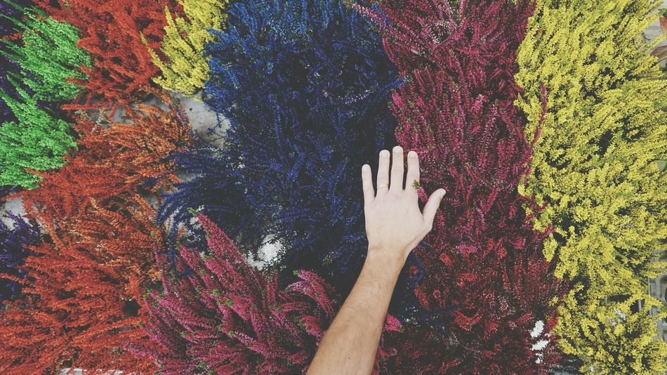 Multi Colored One Person Human Hand People Human Body Part Close-up Calluna Choice Is In Your Own Hands Backgrounds Autumn Personal Perspective Grass Colorful EyeEmMagazine Eyeemmarket Eyeemphotography EyeEm Nature Lover EyeEmBestPics Automne Colors Nature Large Group Of Object Human Arm Opportunity Beautifully Organized