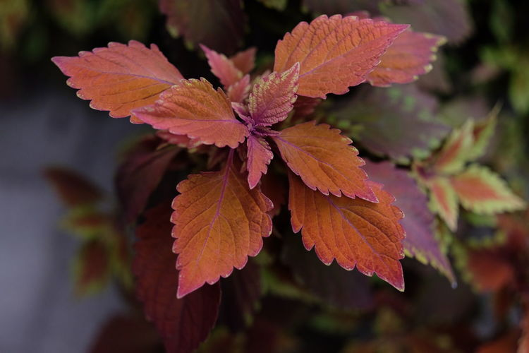 Autumn Beauty In Nature Change Close-up Day Flower Flower Head Focus On Foreground Fragility Freshness Growth Leaf Leaf Vein Leaves Natural Condition Nature No People Outdoors Petal Plant Plant Part Selective Focus Vulnerability