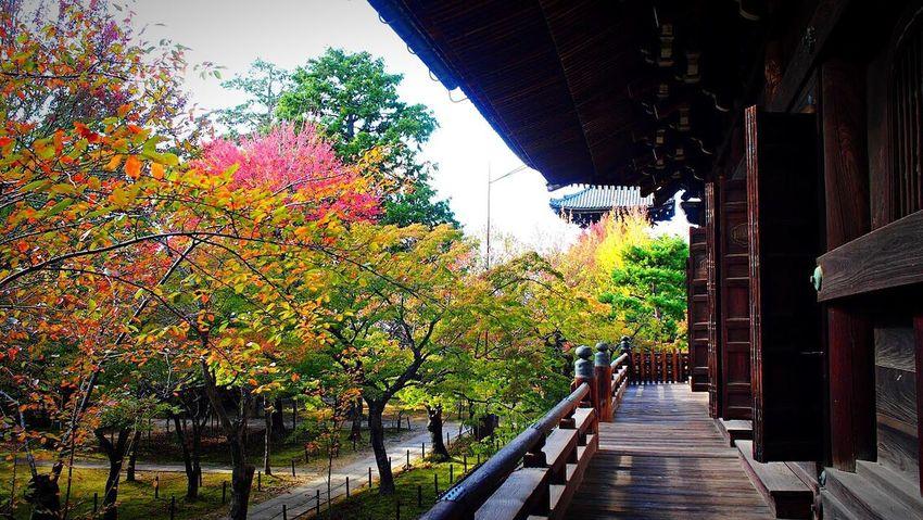 真如堂 京都 Travel Destinations Autmn Trees Autumn Colors Autmn Kyoto,japan Kyoto Tree Autumn Architecture Built Structure Nature Outdoors Day