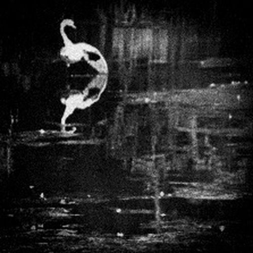 Solitary Swan Abstract Fortheloveofblackandwhite Alonenotalone