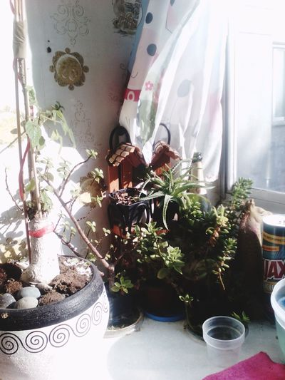 My Own Paradise Drinking Tea Just Looking Plants 🌱 In The Kitchen