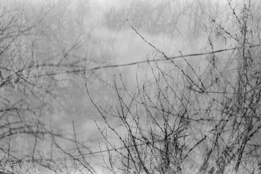 35mm Film Analogue Photography Bare Tree Beauty In Nature Branch Caffenol Canon AE-1 Close-up Day Double Exposure Dried Plant Film Ilford HP5 Plus Nature No People Outdoors Sky Tranquility Tree