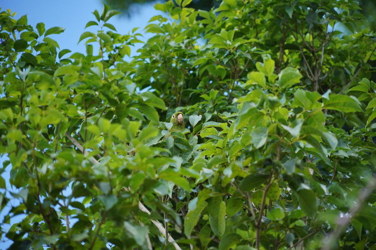 Low angle view of green leaves on tree