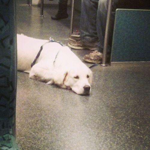 Sbahnfahren Dog Dogwatching Ichwilleinhund fuchur