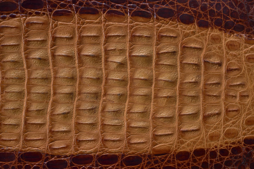 Advanced Backgrounds Brown Close-up Crocodile Crocodile Skin Day Full Frame Graphics Indoors  Leather Lines Material No People Pattern Protruding Shading  Skin Taiwan Wood - Material