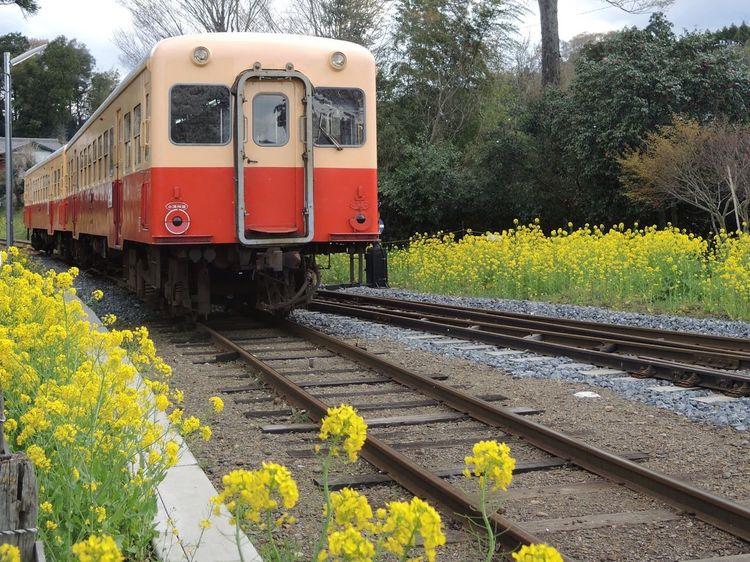 Local Railway 小湊鉄道 菜の花 Nikon P7700