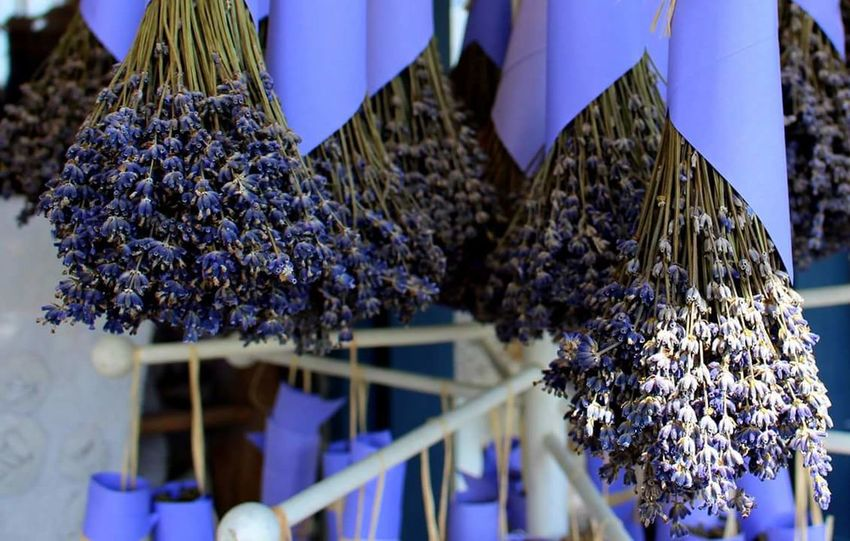 No People Blue Outdoors Purple Hanging Nature Tihany-Hungary Hungary Levandula Levander