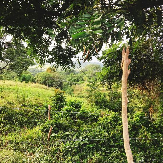 Shrubs and sticks Plant Tree Growth Green Color No People Nature Tranquility Beauty In Nature Tranquil Scene Outdoors Grass Landscape Branch Forest Water Scenics - Nature Day Field Sunlight Land