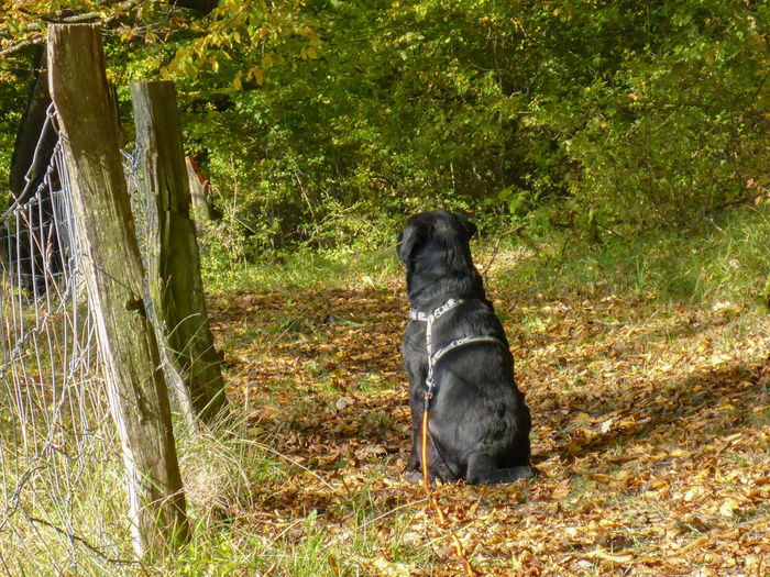 Holly watching