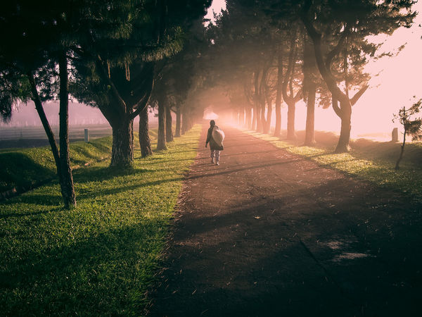 walking a way woman LINE Road Less Travelled Walking Around A Woman Beauty In Nature Day Full Length Grass Landscape Nature One Person Outdoors Real People Route Shadow Sunlight Tree Tree Trunk #FREIHEITBERLIN