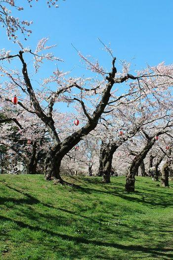 Flower tree against clear sky