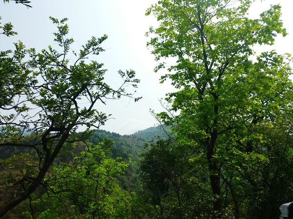 Nature Nature Photography Naturelovers Dawn Pleasant Art Yellow Brown Shadow Pattern Close-up Green Patterns In Nature Branches And Sky Branches Leaves Noflowers Shades Of Green  Leaf Vein Leaves🌿 Colourful Mixture  Tree Mountain Tea Crop Forest Branch Leaf Tree Area Lush Foliage Social Issues Sky
