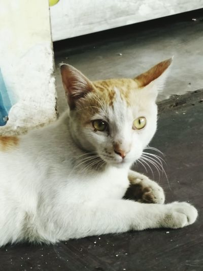 Our neighbourhood cat Cat Cats Cats Of EyeEm Cats Eyes Cats 🐱 Animals Animal Animal Photography Street Animals Shining Eyes Non Human Streetsofindia Steeet Life Cat Life Nature Animal_collection Cat Eyes Cat Watching Cat Photography Sitting Cute Cats Cute Animal Themes Pet Portraits
