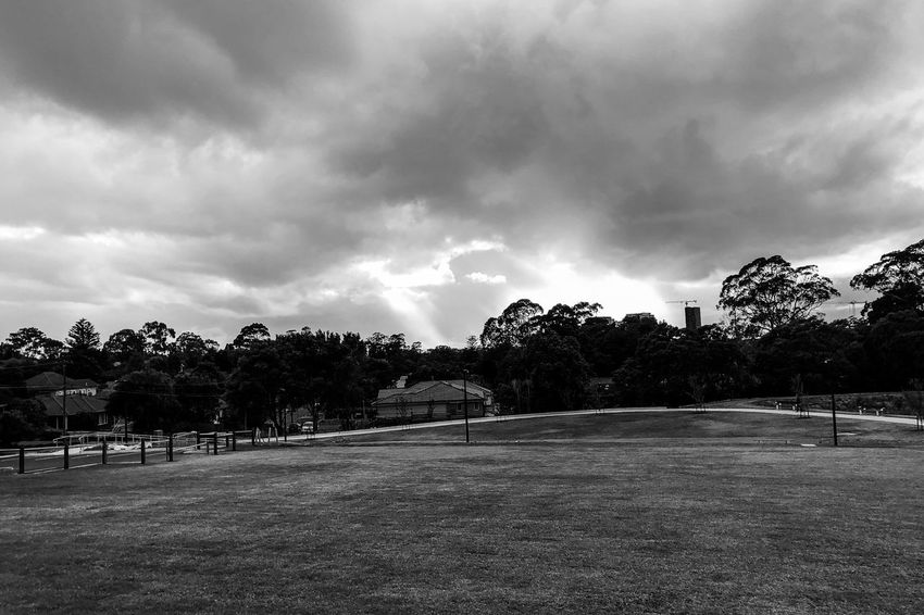The holy light Monochrome Light And Shadow Black And White Cloud - Sky Tree Sky Plant Nature No People Storm Tranquility Environment Tranquil Scene Outdoors Day Overcast Beauty In Nature Park Land Grass Scenics - Nature