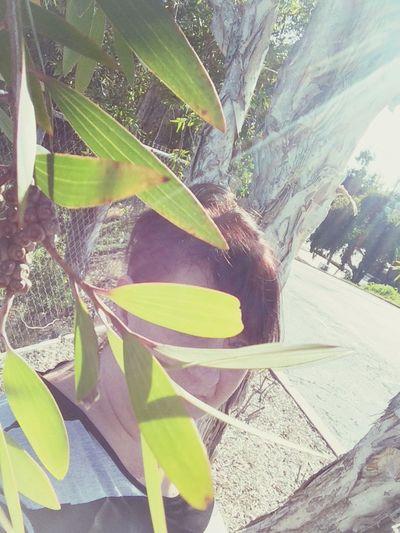 Plant growing in sunlight