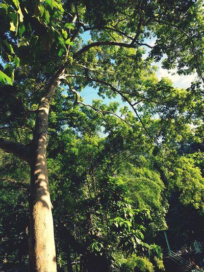 Tree Sky Leaf